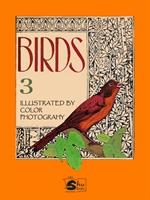 도서 이미지 - Birds III