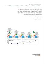 도서 이미지 - Cotranslational protein targeting to the membrane Nascent-chain transfer in a quaternary c