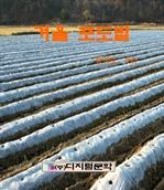 도서 이미지 - 겨울 포도밭