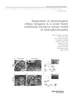 도서 이미지 - Impairment of photoreceptor ribbon synapses in a novel Pomt1 conditional knockout mouse mo