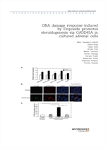 도서 이미지 - DNA damage response induced by Etoposide promotes steroidogenesis via GADD45A in cultured