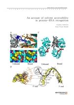 도서 이미지 - An account of solvent accessibility in protein-RNA recognition