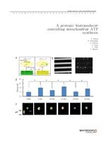도서 이미지 - A protonic biotransducer controlling mitochondrial ATP synthesis