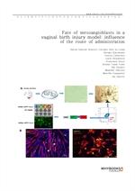 도서 이미지 - Fate of mesoangioblasts in a vaginal birth injury model influence of the route of administ