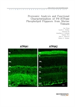 도서 이미지 - Proteomic Analysis and Functional Characterization of P4-ATPase Phospholipid Flippases fro