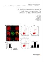 도서 이미지 - Triptolide attenuates proteinuria and podocyte apoptosis via inhibition of NF-κBGADD45B