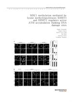도서 이미지 - MDC1 methylation mediated by lysine methyltransferases EHMT1 and EHMT2 regulates active AT