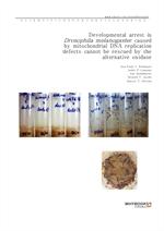 도서 이미지 - Developmental arrest in Drosophila melanogaster caused by mitochondrial DNA replication de