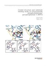 도서 이미지 - Crystal structure and substrate binding mode of ectonucleotide phosphodiesterasepyrophosph