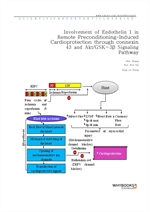 도서 이미지 - Involvement of Endothelin 1 in Remote Preconditioning-Induced Cardioprotection through con