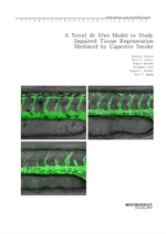 도서 이미지 - A Novel In Vivo Model to Study Impaired Tissue Regeneration Mediated by Cigarette Smoke