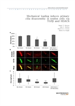 도서 이미지 - Mechanical loading induces primary cilia disassembly in tendon cells via TGFβ and HDAC6