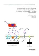 도서 이미지 - Contribution of prostanoid FP receptor and prostaglandins in transient inflammatory ocular