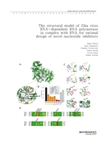도서 이미지 - The structural model of Zika virus RNA-dependent RNA polymerase in complex with RNA for ra