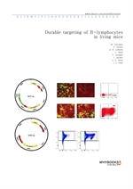 도서 이미지 - Durable targeting of B-lymphocytes in living mice