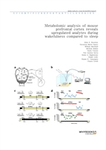 도서 이미지 - Metabolomic analysis of mouse prefrontal cortex reveals upregulated analytes during wakefu