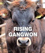 도서 이미지 - RISING GANGWON Vol.82