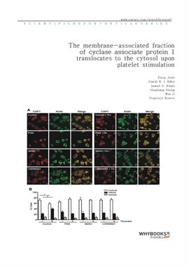 도서 이미지 - The membrane-associated fraction of cyclase associate protein 1 translocates to the cytoso