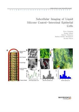 도서 이미지 - Subcellular Imaging of Liquid Silicone Coated-Intestinal Epithelial Cells