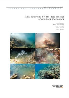 도서 이미지 - Mass spawning by the date mussel Lithophaga lithophaga