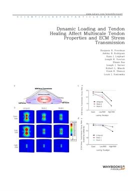 도서 이미지 - Dynamic Loading and Tendon Healing Affect Multiscale Tendon Properties and ECM Stress Tran
