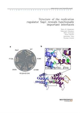 도서 이미지 - Structure of the replication regulator Sap1 reveals functionally important interfaces