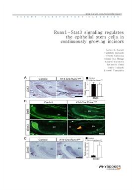 도서 이미지 - Runx1-Stat3 signaling regulates the epithelial stem cells in continuously growing incisors