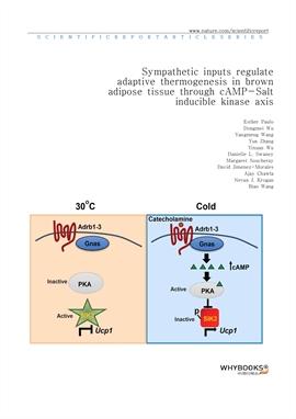도서 이미지 - Sympathetic inputs regulate adaptive thermogenesis in brown adipose tissue through cAMP-Sa