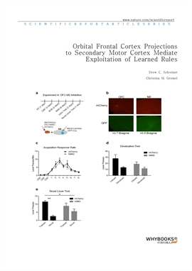 도서 이미지 - Orbital Frontal Cortex Projections to Secondary Motor Cortex Mediate Exploitation of Learn