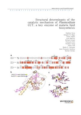 도서 이미지 - Structural determinants of the catalytic mechanism of Plasmodium CCT, a key enzyme of mala