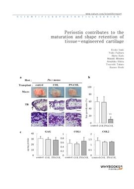 도서 이미지 - Periostin contributes to the maturation and shape retention of tissue-engineered cartilage