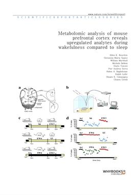 도서 이미지 - Metabolomic analysis of mouse prefrontal cortex reveals upregulated analytes during wakefu