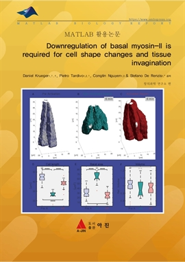 도서 이미지 - Downregulation of basal myosin-II is required for cell shape changes and tissue invaginati
